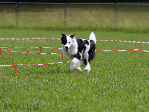 Hundeschule Hundegut Thierhaupten